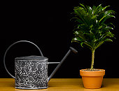 Watering can beside potted plant (still life)
