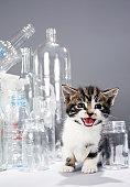 Kitten amongst recycled bottles and jars