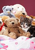 Kitten nestled amongst soft toys