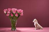 Kitten looking at vase of roses