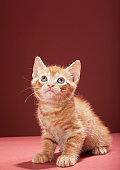 Portrait of kitten looking up