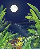 Jungle Night Scene