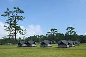 Group of Camping Tent at Phukradung Nation Park, Thailand