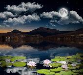 lotus flower and full moon