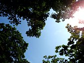 Sunshine And Blue Skys Framed by Tree Tops