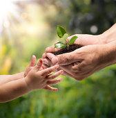 life in your hands - garden