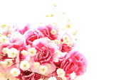 Bicolor carnation on white background