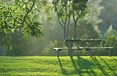 Bench in park with trees