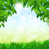 Green Nature Spring Background