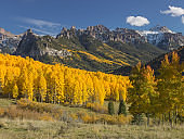 Fall Color aspens in the Rocky Mountains