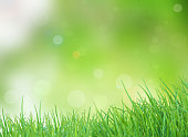 bright spring with sunlight bokeh background