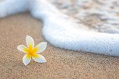 Plumeria on Beach