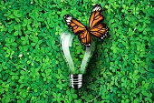 Light bulb on green grass background, monarch butterfly, concept idea