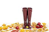 Autumn concept. Rubber boots color Marsala. Autumn leaves and ap