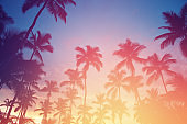 Sunset in tropics. Coconut trees and turquoise sea