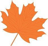 Maple leaf icon, flat, cartoon style. Isolated on white background. Vector illustration.