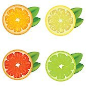 Realistic Detailed Citrus Set. Vector