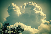 Cloud Typologies: Cumulus Clouds above trees in moody Sky during Sumer Monsoon Thunder Storm.