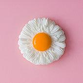 Daisy flower with egg yolk. Minimal concept. Flat lay.