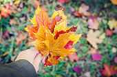 Bouquet of colorful autumn fallen leaves in a hand.