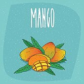 Isolated ripe mango fruits whole and cut