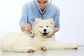 Veterinarian examining pet dog on table in vet clinic