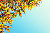 Tree In Autumn