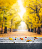 Autumn Leaves On Bench In Park