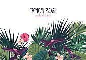 Floral horizontal postcard design with hibiscus flowers, monstera and royal palm leaves. Exotic hawaiian vector background