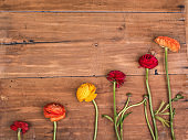 Ranunkulyus bouquet of red flowers on a wooden background