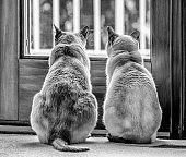 Bird watching with a friend