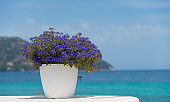 flowerpot with blue flowers in front of ocean