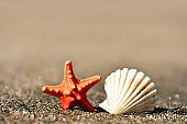 Seashell and starfish on the beach