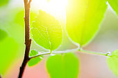 The sun is hitting the fresh green leaves