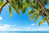 Coconut palm trees with tropical sea