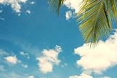 Palm leaf and blue sky vintage effect