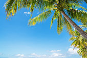 Coconut palm trees and blue sky background