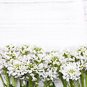 white flowers frame on white wooden background