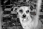 Rescued dog from mexico