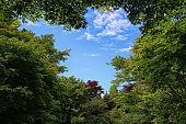 Blue Sky in the Garden