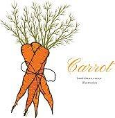 Vector carrot