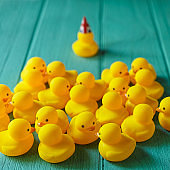 Rubber ducks sitting talking in a group whilst a single duck with a Union Jack hat on breaks away from the group.