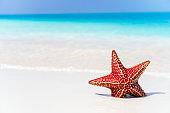 Tropical beach with starfish