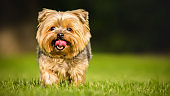 Cute_Pet_Dog3_4k