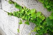 을왕리 식물