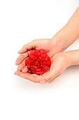 Hand holding a carnation