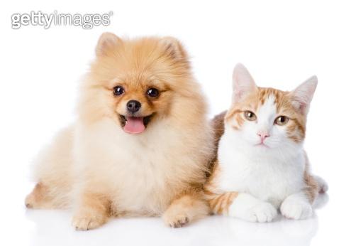 vs 4 - Cat vs Dog
