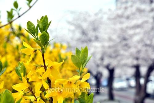 봄이 왔어요