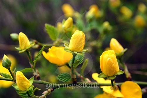 꽃 피는 봄