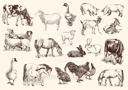 스케치 - 가축